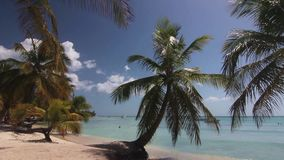 Natural beach with palm trees. In the Dominican Republic stock footage
