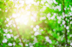 Natural beautiful green Bokeh - Blur Tree and Park background Stock Photography