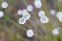 Natural beautiful small flower grass. Natural beautiful small flower grass with blures background stock photos