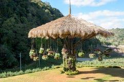 Natural and beautiful tropical garden Stock Photos