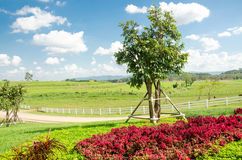 Natural and beautiful tropical garden in Singha park Chiang Rai,Thailand Royalty Free Stock Photo
