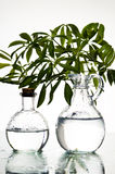 Natural beauty. Glasses with  organic creative background . Natural beauty Stock Photo
