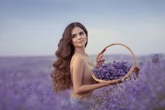 Natural beauty. Beautiful provence woman with basket flowers harvesting in lavender field at sunset. Attractive pretty girl with. Long healthy curly hair royalty free stock photos