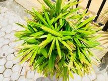 Flowers Greenery grass plant Stock Image
