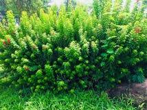 Flowers Greenery tree grass Royalty Free Stock Photo