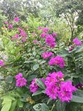 Purple Flowers plant Stock Photography