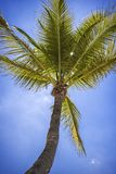 Natural beauty of our palm trees in Florida stock image