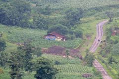 Natural beauty in rural area. Green farms, rural house, green trees and rural road providing natural beauty to the rural area. this photo click at rural area of stock photography