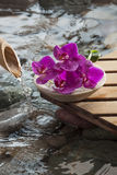 Natural beauty with water and wood elements Royalty Free Stock Images