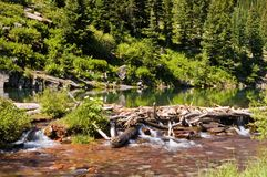 Natural Beaver Dam Royalty Free Stock Photography
