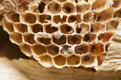 Natural bee hive Stock Image