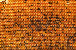 Natural beebread in honeycombs Stock Image