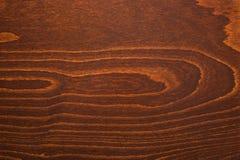 Natural beech texture, brown color Stock Photos