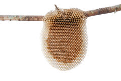 Natural Beehive isolated on white background Stock Images