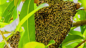 Natural Beehive stock video