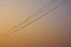 Natural bird stay in electrical line Stock Images