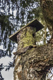 Natural birdhouse Stock Images