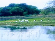 Birds lake stock photo