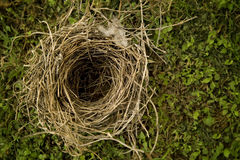 Natural Birds Nest Stock Images