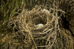 Natural Birds Nest. Made of Sticks and Mud stock photo