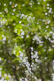 Natural blow sparkling bokeh of tree soft abstract green backgro Stock Photos