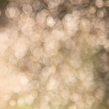 Natural blurred abstract background Stock Image