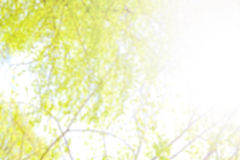 Natural blurred abstract background made of tree leaves. stock photos