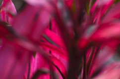 Natural blurred background - beauty of nature Stock Image
