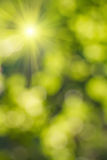Natural  blurred background. Element of design Stock Photography