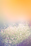 Natural blurred background of pink flower on orange background. Royalty Free Stock Photos