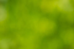Natural blurred background texture Royalty Free Stock Photo