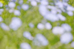 Blurred floral background of blue at green yellow royalty free stock photography
