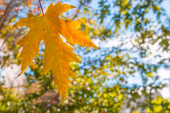 Natural blurred light autumn background Royalty Free Stock Photography