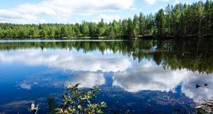 Natural bog and the lake royalty free stock photos