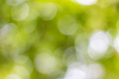 Natural bokeh. Abstract glowing light on a green background Stock Photos