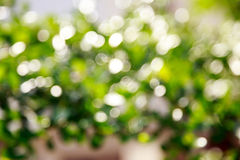 Natural Bokeh Background Royalty Free Stock Photos