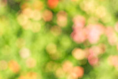 Natural bokeh background Stock Photography