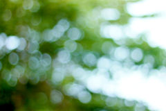 Natural bokeh background outdoor. In mid day Royalty Free Stock Photos