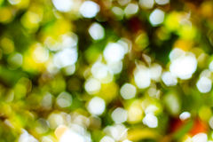 Natural Bokeh,blurred bokeh. Stock Photography