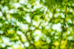 Natural Bokeh,blurred bokeh green color Royalty Free Stock Photography