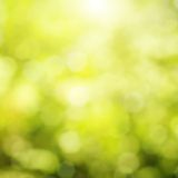 Natural bokeh Stock Photography