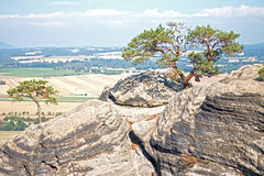 Natural Bonsai on Rock Stock Photo