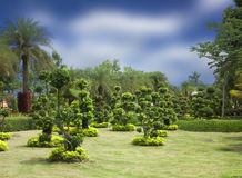 Natural bonsai tree garden Royalty Free Stock Photo