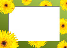 Natural border. Yellow flower on a green border stock photography