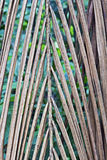 Natural braided dried palm leaf Stock Photo