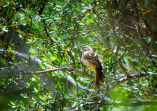 Natural brid in the tree Stock Photo