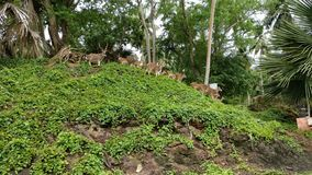 Andaman Islands, beach stock image