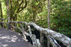 Natural bridge railing of vines and roots and trunks of tropical trees Stock Image