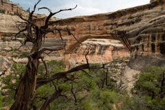 Natural Bridges National Monument in Utah. Stock Photography