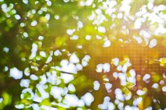 Natural Bright blur Stock Images